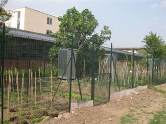 Una foto degli orti in seguito alla bonifica