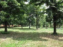 Parco di Via Pergolesi