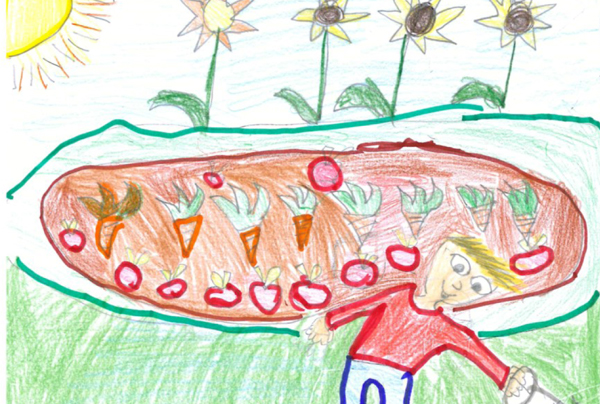 disegno di un orto e un uomo che innaffia le piante